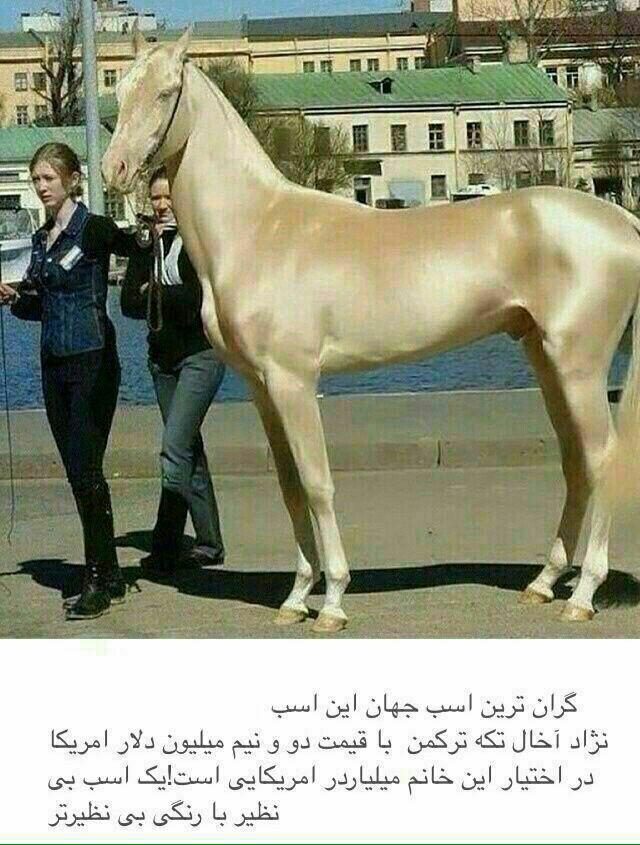قیمت اسب کوچولو