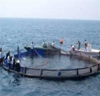 نصب 10 هزار تن قفس پرورش ماهی در دریای خزر