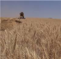 تهیه ۴۸۸ هزار تن بذر گندم/ خودکفایی گندم پایدار میشود