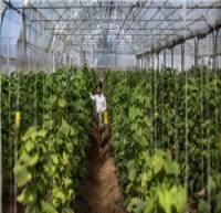 17 واحد تولیدی کشاورزی قزوین نیمهفعال و غیرفعال است