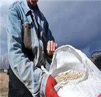 اختصاص 53 هزار و 500 هکتار از اراضی استان مرکزی به کشت گندم آبی در سال زراعی جاری
