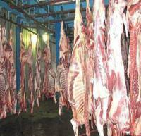 تزریق گوشت قرمز تازه گوسفندی به بازار/ توقف صادرات قیمت تخم مرغ را افزایش داد
