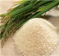 تفاوت ۴ هزار تومانی قیمت برنج از شالیزار تا بازار/ برخورد با دو واحد متقلب عرضه