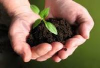 جنگل و درختان را مادر طبیعت بدانیم/ همه مسئول هستند