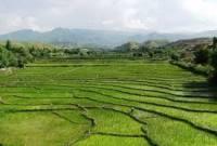 برگزاری کلاس آموزشی برای کشاورزان برنج کار
