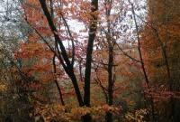 طبیعت پاییزی جنگل میاندورود