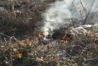 آتشسوزی باغ مرکبات در روستای زیدسفلی+ تصاویر