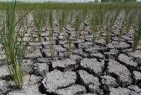 3150 هکتار شالیزار میاندورود امکان کشت ندارند/ کشاورزان بیمه تضمین تولید انجام دهند