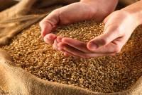 خرید و نگهداری دو هزار تن گندم بهعنوان بذر