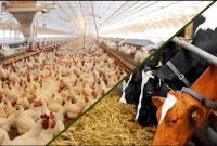 شوک حذف ارز دولتی نهادههای دامی به بازار دام و طیور/تولید مرغ دیگر صرفه ندارد!