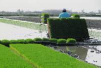 انجام نخستین نشاء برنج در میاندورود