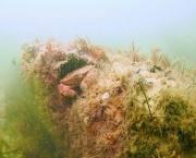 کشف جنگل دریایی+تصاویر