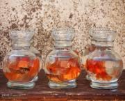 تصاویر/ بازار فروش ماهی قرمز