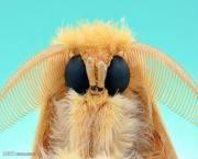 تصاویری از چهره حشرات