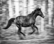 عکاسی های بسیار زیبا از اسب های وحشی