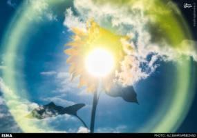 عکس/ مزارع زیبای آفتابگردان گلستان