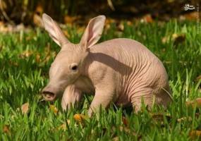 عکس/حیوانات در نوزادی