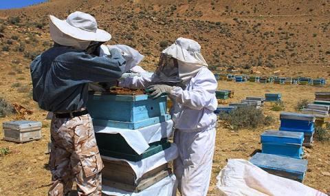 درآمد 24 میلیونی با طرح پرورش زنبورعسل/ زنبورداری بهترین نسخه مقابله با خشکسالی در سیستان
