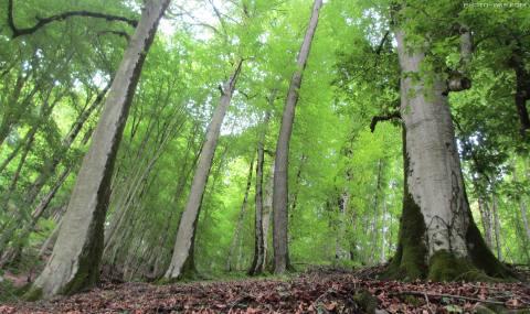 دلرباترین جلوههای طبیعی در مازندران/ پزشک طبیعت در مازندران را بشناسید