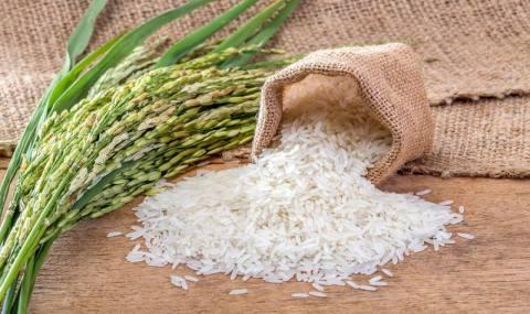 برنج طارم روی دست کشاورزان مانده است/چرا صدای مسؤولان و نمایندگان درنمیآید؟