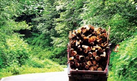 تبر تغییر کاربری به جان جنگلها/ رشد صعودی تخریب طبیعت مازندران