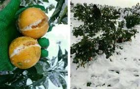 53 روز از پیگیری نمایندگان مازندران گذشت/ باغداران خسارتدیده مازندرانی در حسرت حتی یک ریال کمک دولت!