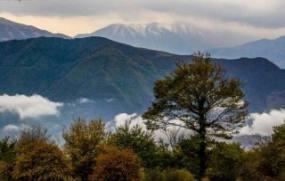 جنگلهای مازندران فرصت مناسبی برای رونق اقتصادی و تحقق اقتصاد مقاومتی