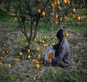 ارائه تسهیلات کمبهره به کشاورزان خسارتدیده مازندرانی ابلاغ شد