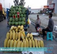 ماجرای هندوانههای 250 تومانی در شرق مازندران!/عکس